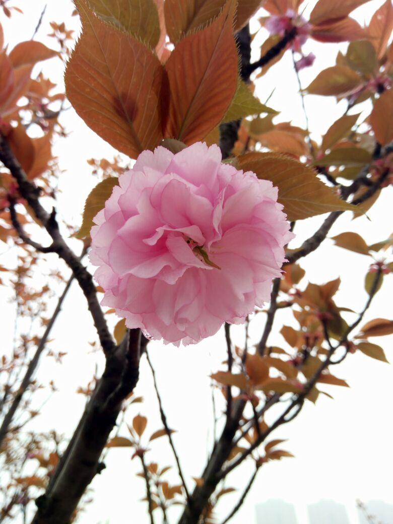 南昌的春天来了~